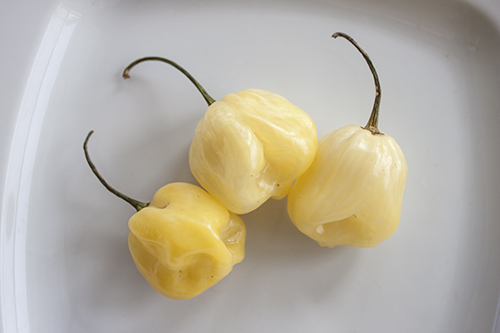 White Giant Habanero Peppers